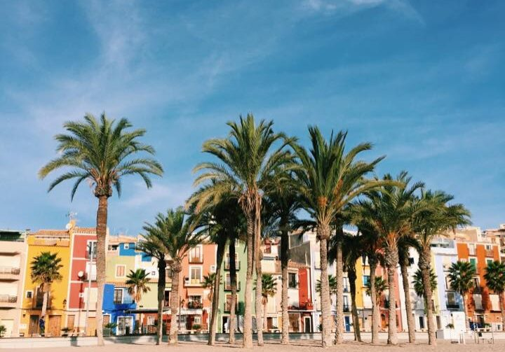 Spania.palmer.stilig